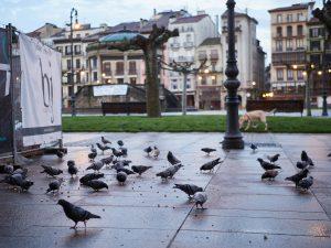 Calles de Pamplona totalmente vacías durante la tercera semana de cuarentena y confinamiento total decretado en España como consecuencia del coronavirus, en Pamplona