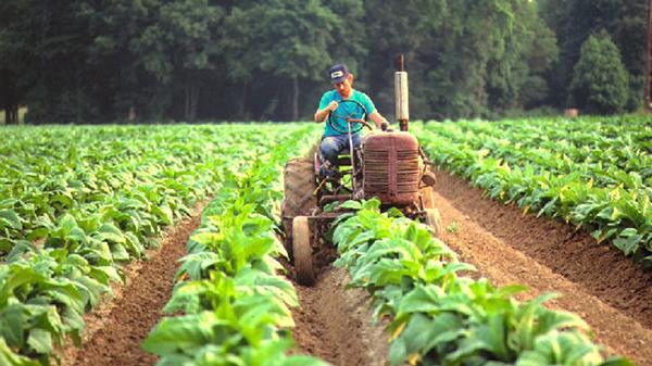 Bloqueos en Yapacaní provocaron pérdidas millonarias en el sector agropecuario y especulación de precios